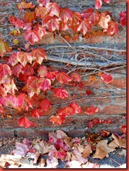 julias art and skull progress plus autumn leaves 011
