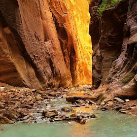 Among the Narrows by Craig Bill - Nature Up Close Rock & Stone ( slot canyon, utah, narrows, canyon, zion, river )