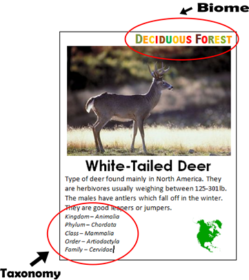 FREE Animal Fact Cards