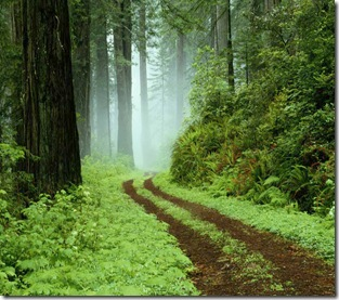 A forest path in Redwoods State Park, California.