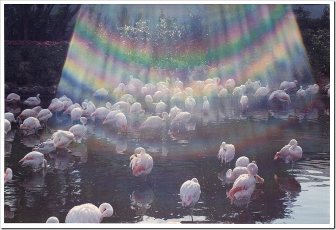 rainbow flamingos