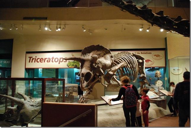 11-12-12 B Museum Of Natural History 009