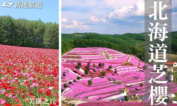 北海道賞芝櫻