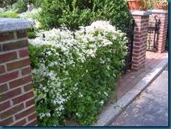Vetical-garden-White-flowers-on-fence