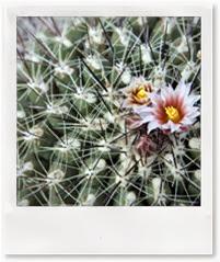 prickly flower