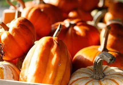 Fall-Oct12-9898_thumb[3]