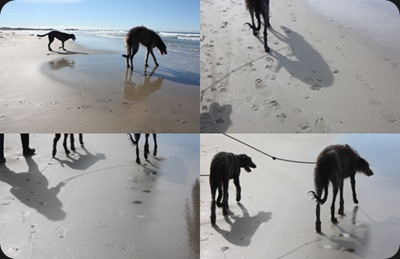 dogs_on_the_beach