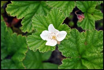 04w9a - Hike - Baked Apple Berry Blossom