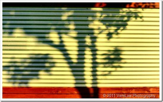 Shadowyp1010651