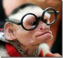 monos piensan blogdeimagenes (16)