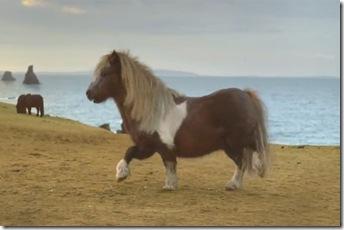 ponei-dansator-580x385