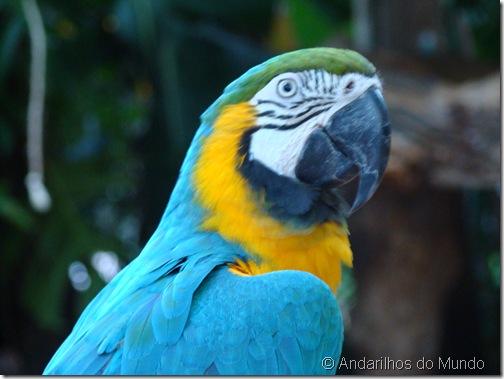 Arara-Amarela Arara-Canindé Arara Parque das Aves Foz do Iguaçu BlogTurFoz