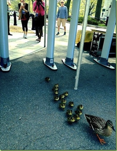 whitehouse duckies