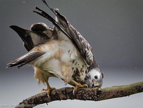 fotos de animais na hora certa desbaratinando  (2)