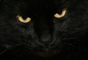 blackcat111