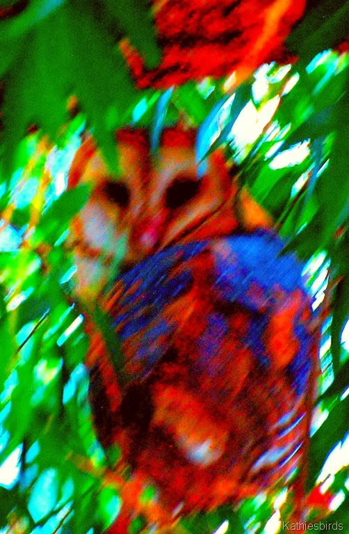 2-28-14 AFF 19 Barn Owl Sweetwatercolor-kab