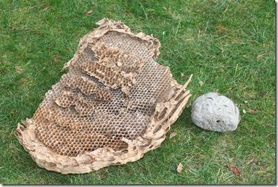 Hornet's Nest-3