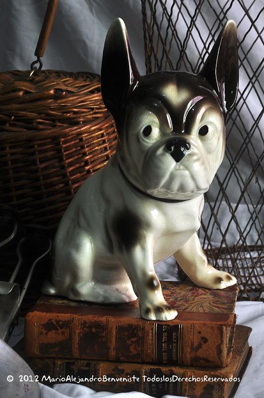 perro bulldog 2
