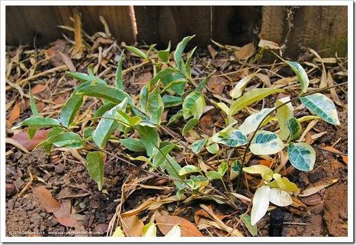 140716_Fling_plants_012