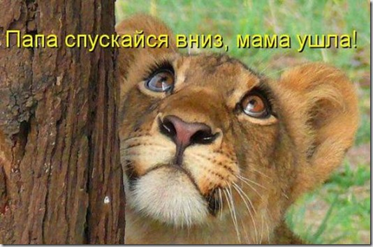 f09f08932fc63620110e0f15a0c_prev