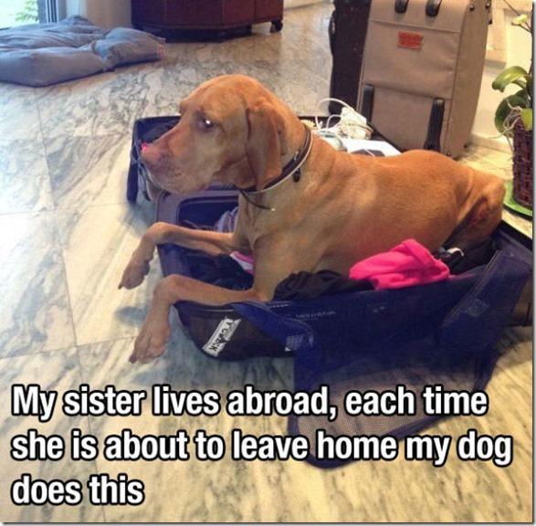 dog-mans-best-friend-21