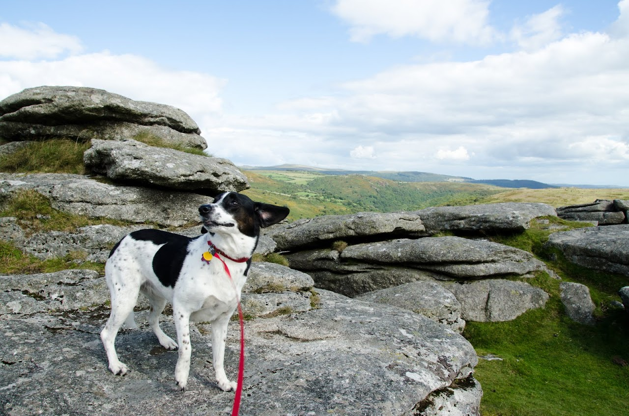 Bodmin Moor