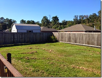 Running & Fence Staining (9)