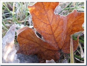 20111203_leaves_006