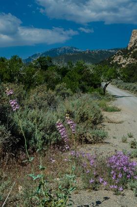 Snake Creek drive