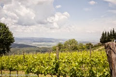 vineyard-olive-grove-1