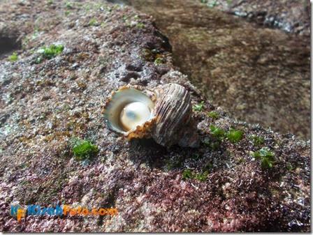 karang pantai watu kodok_09