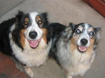 Smiling Puppies.jpg