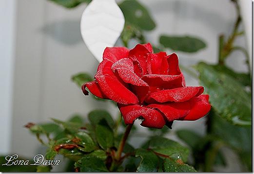 Crimson_DewDrops