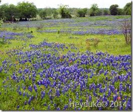 Chappel Hill TX 010
