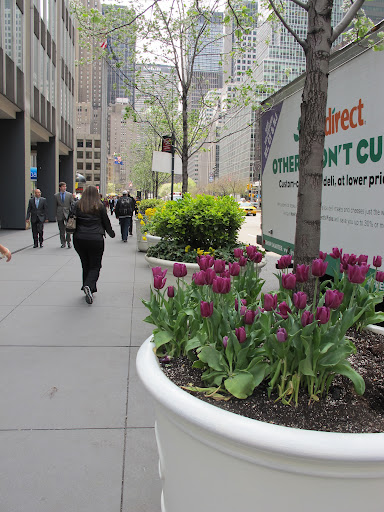 Tulips and daffodils are springing out of the planters on Park.