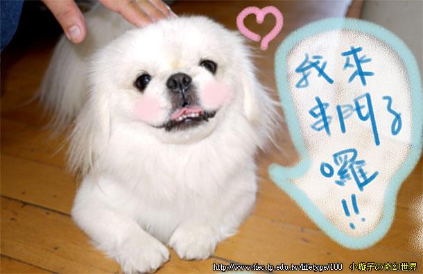 dog_blog1.jpg