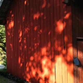 Ena gaveln klar och den lyser i vackraste rött. Lönnens skuggor är fantastiska mot det röda!