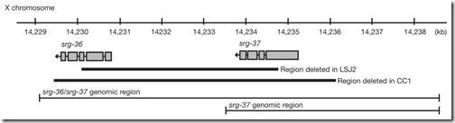 c-elegans-gen