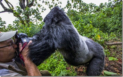 3_CATERS_GORILLA_PUNCH_05-800x498