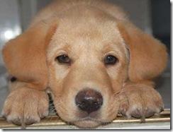 Últimas esterilizaciones quirúrgicas gratuitas para caninos en Las Toninas