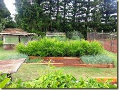 20131009_Vegetable garden (Small)