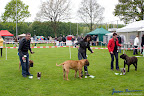 20100513-Bullmastiff-Clubmatch_31005.jpg