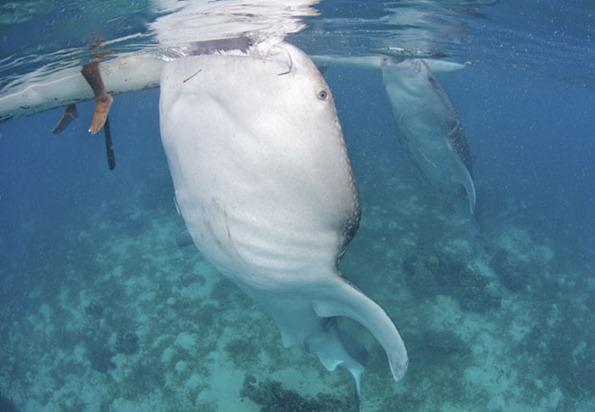 whale13_2103776i