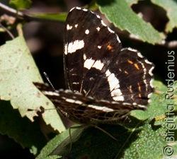 butterfly_20110802_skg1