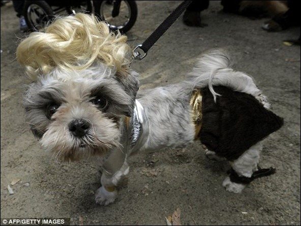 The parade of masquerading dogs is the largest Halloween Dog Parade in the U.S.