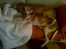 Tita y Duna en el sofá (7)