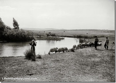 Aphek, source of Yarkon River with flock of sheep, mat02807