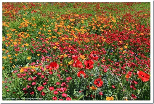 140414_SoDavis_wildflower_meadow_008