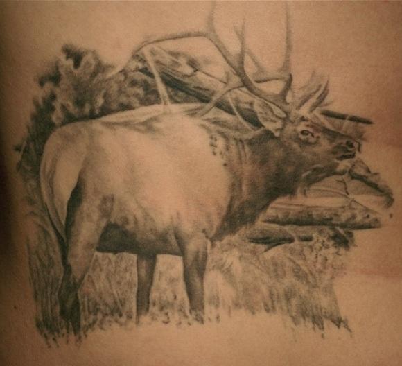 Elk #4