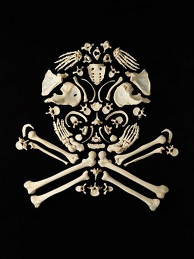 Francois-Robert-Bones-art-11